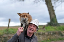 История отом, как дедушка спас лисенка