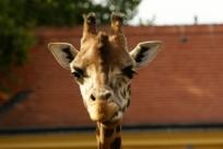 Топ-10 лучших зоопарков мира