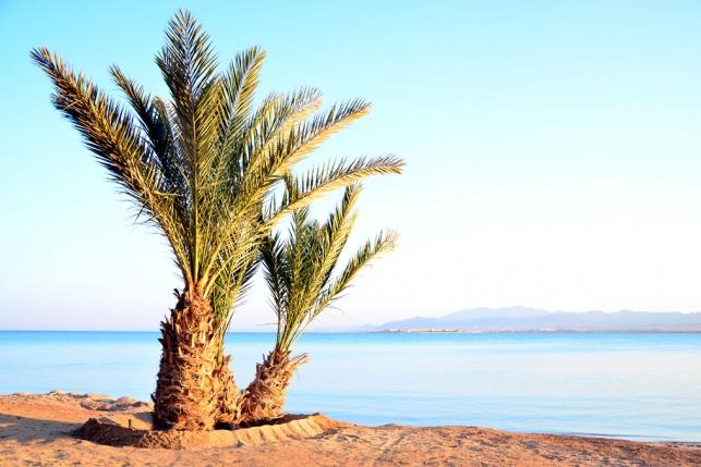 Египет, Тунис или Турция: выбираем курорт