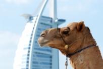 10 главных причин посетить Дубай