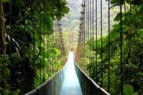 7 самых красивых лесов на планете