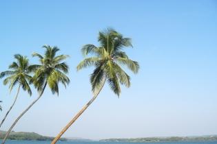 Как выбрать курорт в Индии: Гоа или Керала