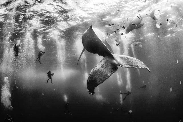 Фотографии победителей конкурса Traveler Photo 2015