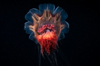 Подводные пришельцы, о которых ты не знал