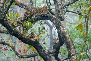 Фотокнига индийских джунглей