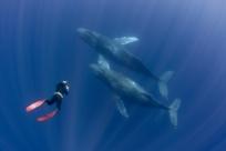 10 лучших мест для наблюдения за китами