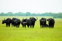 10 главных причин посетить Кению