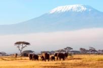 Куда поехать в Африке