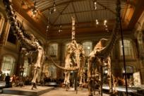 10 лучших музеев Берлина