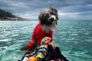 Собака Нирвана покоряет Средиземное море