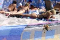 7 смертельно опасных животных и насекомых, обитающих на популярных курортах