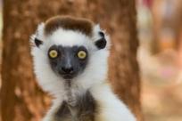 10 редких животных под угрозой исчезновения