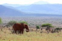 Национальные парки мира, которые можно посетить в феврале
