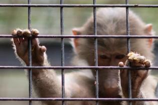 Зоопарк Буэнос-Айреса отпускает животных на свободу