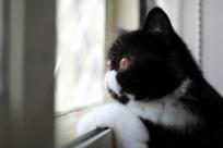 Где оставить кота на время отпуска