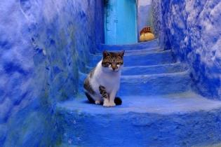 Тайна голубого города в Марокко