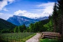 Провинция Трентино: горные лыжи, солнце и вино