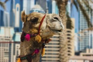 Как выбрать курорт в ОАЭ: 7 главных направлений