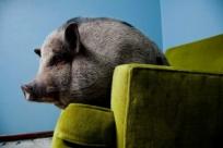 Винсент Муси: искусство фотографировать животных