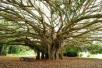 Древо жизни: 10историй рассказанных деревьями