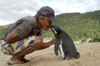 Пингвин проплывает 8000 км каждый год, чтобы увидеть человека, спасшего ему жизнь