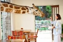 Завтрак с жирафами